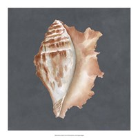 "Shell on Slate IX by Megan Meagher - 18"" x 18"""