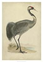 Morris Crane I Fine Art Print