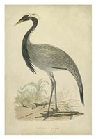 Morris Crane II Fine Art Print