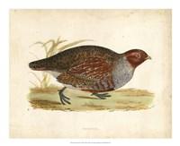 Morris Pheasants I Fine Art Print
