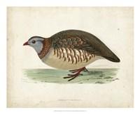 Morris Pheasants III Fine Art Print