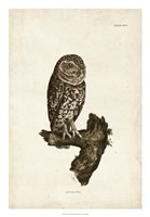 """18"""" x 26"""" Owl Pictures"""