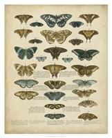 Tabula de Papilio Fine Art Print