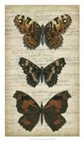 """Butterfly Script II by Vision Studio - 18"""" x 30"""""""