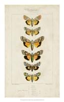 """Pauquet Butterflies I by P. Pauquet - 14"""" x 22"""""""