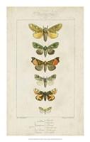"""Pauquet Butterflies II by P. Pauquet - 14"""" x 22"""""""
