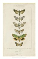 """Pauquet Butterflies III by P. Pauquet - 14"""" x 22"""""""