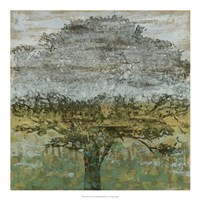 Arbor Shadow II Framed Print