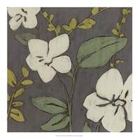 "Cream Florals I by Jennifer Goldberger - 20"" x 20"""