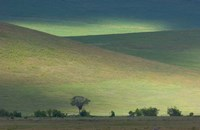 "Panoramic view of hill, Ngorongoro Crater, Arusha Region, Tanzania by Panoramic Images - 16"" x 10"""
