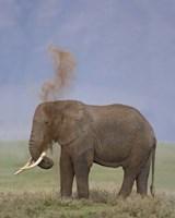 "African Elephant, Ngorongoro Crater, Arusha Region, Tanzania by Panoramic Images - 19"" x 24"""