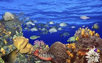 """School of fish swimming near a reef by Panoramic Images - 16"""" x 10"""""""