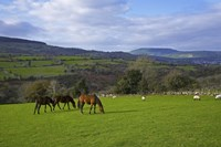 "Horses and Sheep in the Barrow Valley, Near St Mullins, County Carlow, Ireland by Panoramic Images - 24"" x 16"""