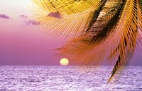 Stylized tropical scene with violet sea, pink sky, setting sun and palm fronds Fine Art Print