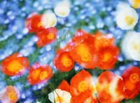 """Kaleidoscopic flowers in blues, orange and white by Panoramic Images - 24"""" x 18"""""""