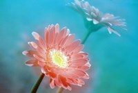 """Close up of pink and lavender flowers by Panoramic Images - 24"""" x 16"""""""