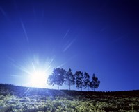 """Silhouette with trees in sparse field back lit by white sun by Panoramic Images - 36"""" x 30"""", FulcrumGallery.com brand"""