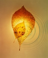 """Superimposed amber leaves over circles with bright light by Panoramic Images - 20"""" x 24"""""""