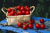 """Still life of cherry tomatoes in a rectangular woven basket sitting on distressed blue painted table top by Panoramic Images - 36"""" x 24"""""""