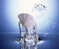 """White scallop shell being raised on pillar of bubbling water by Panoramic Images - 24"""" x 20"""" - $37.49"""