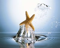 """Starfish rising on water bubble toward bright light by Panoramic Images - 24"""" x 20"""""""