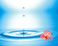 """Water drops rising from water rings with small coral flower by Panoramic Images - 24"""" x 19"""""""
