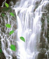 """Green leaves cascading in front of waterfall by Panoramic Images - 20"""" x 24"""""""