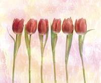 Six pink tulips with green stems and leaves upright in front of pink plaster wall Fine Art Print