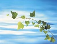 Green vine floating in blue water Fine Art Print