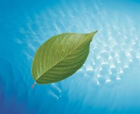 """Single green leaf above blue water with lights by Panoramic Images - 16"""" x 13"""""""