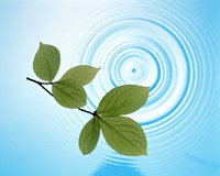 """Twig with green leaves above perfect water circles by Panoramic Images - 16"""" x 13"""""""