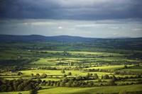 """Pastoral Fields, Near Clonea, County Waterford, Ireland by Panoramic Images - 36"""" x 24"""""""