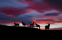 Silhouette of horses at night, Iceland Fine Art Print
