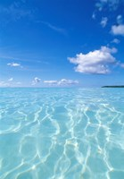 "Tropical water with blue skies in background by Panoramic Images - 25"" x 36"""
