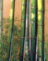 """Bamboo Sticks by Panoramic Images - 19"""" x 24"""""""