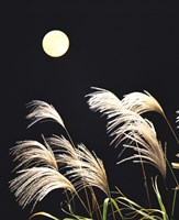 """Close Up View of Foxtail Grass with Full Moon in Background by Panoramic Images - 20"""" x 24"""""""