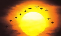 """Silhouetted Birds in Sunset by Panoramic Images - 36"""" x 22"""", FulcrumGallery.com brand"""