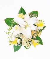 """Arranged Flowers and Leaves on White Background by Panoramic Images - 14"""" x 16"""""""