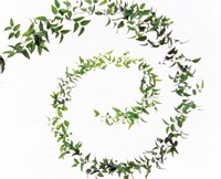 """Spiral of Leaves against Background by Panoramic Images - 16"""" x 13"""", FulcrumGallery.com brand"""