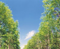 View of Trees against Blue Sky Fine Art Print