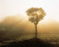 "Tree in Early Morning Mist by Panoramic Images - 36"" x 29"" - $58.99"