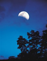 "Half-Moon over Trees in Dark by Panoramic Images - 28"" x 36"""