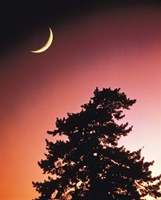 "Crescent Moon over Trees in Front Of Dark Red Sky by Panoramic Images - 29"" x 36"""