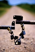 """Close-up of padlocks on a barrier by Panoramic Images - 11"""" x 16"""""""