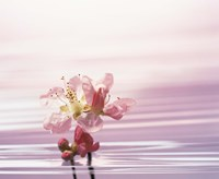 "Flower with Water Background by Panoramic Images - 16"" x 13"""