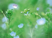 "Wildflowers by Panoramic Images - 36"" x 26"", FulcrumGallery.com brand"