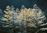 """Forest trees with sunlight at sunrise by Panoramic Images - 24"""" x 18"""""""