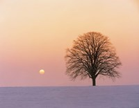 Sunset view of single bare tree Fine Art Print