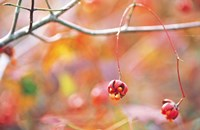 """Thin Tree Branch with Bud by Panoramic Images - 16"""" x 10"""""""