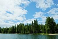 Trees along bank of Lake Almanor, California, USA Fine Art Print